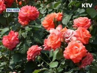 형형색색 장미의 향연 [캠퍼스 리포트]
